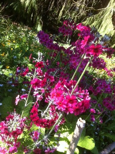 Sanfranciscowitness_chineseflowers